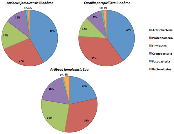 Relative abundances of the six dominant bacterial phyla in the skin microbiome of captive neotropical bats.