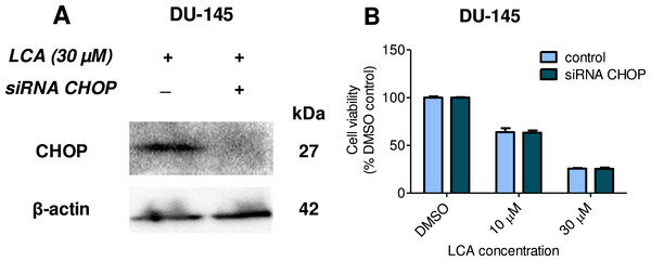 CHOP gene silencing does not affect lithocholic acid-(LCA)-induced cytotoxicity in DU-145 prostate cancer cells.