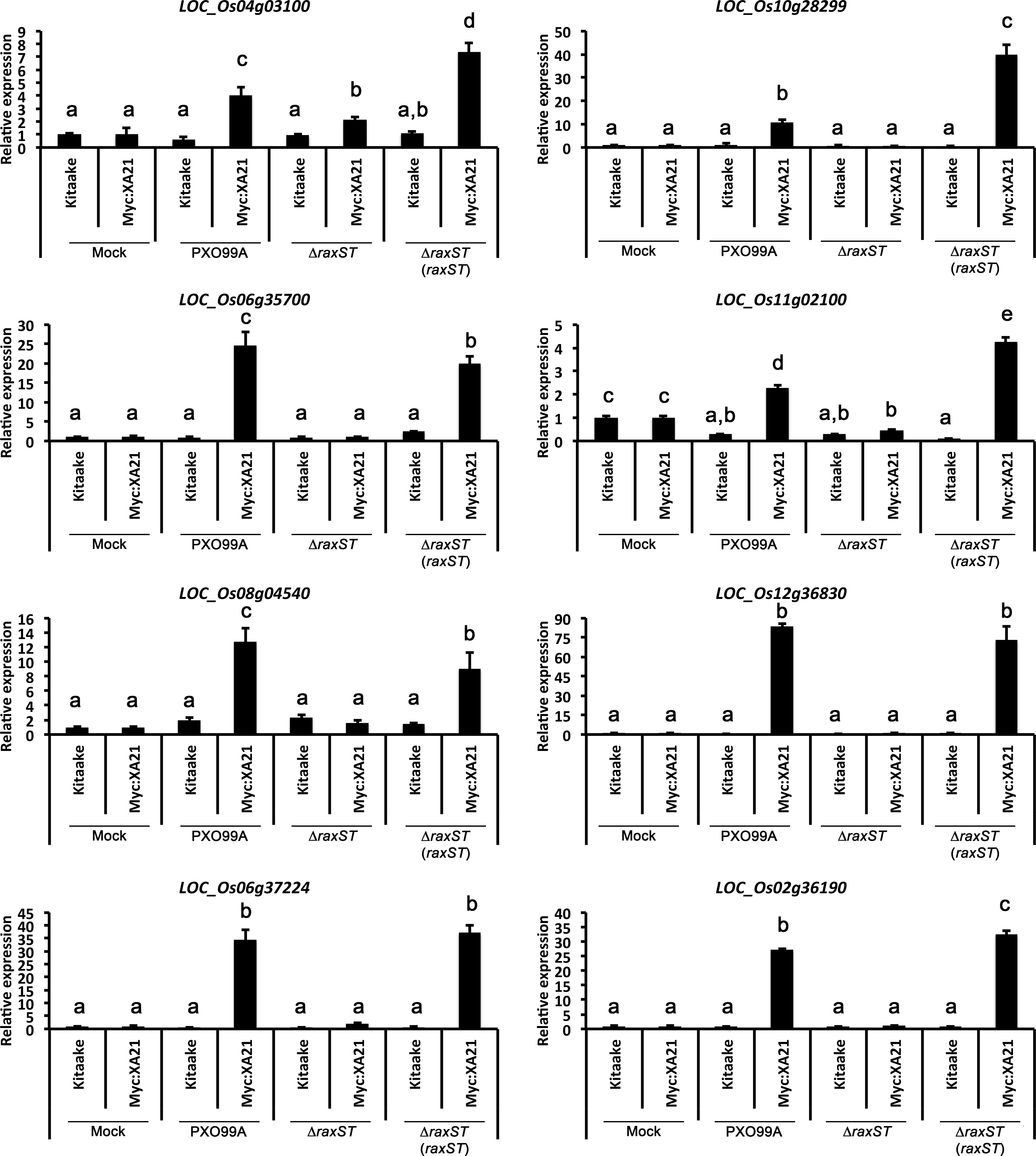 XA21-specific induction of stress-related genes following ...