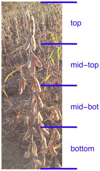 Quadrants of a soybean plant.