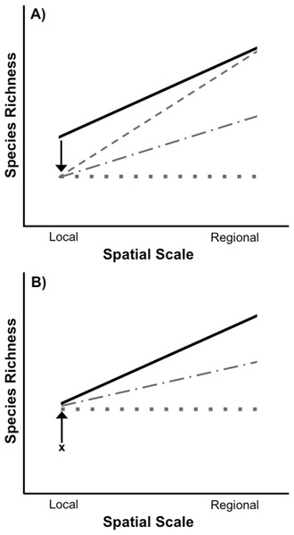 Species loss and recovery at local and regional spatial scales.