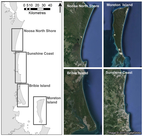 Location of study regions in southeast Queensland in eastern Australia where we monitored experimental nests on beaches and dunes on Moreton Island (n = 38), Bribie Island (n = 27), the Noosa North Shore (n = 38), and the Sunshine Coast (n = 30) in early 2015.
