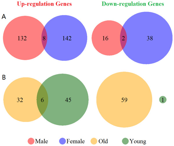 Venn diagram of the differentially expressed genes grouped by sex and age.