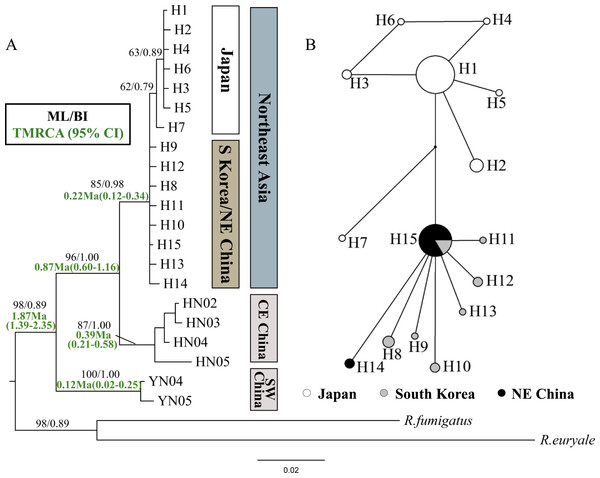 Phylogenetic trees and network for Rhinolophus ferrumequinum populations based on cyt b haplotypes.