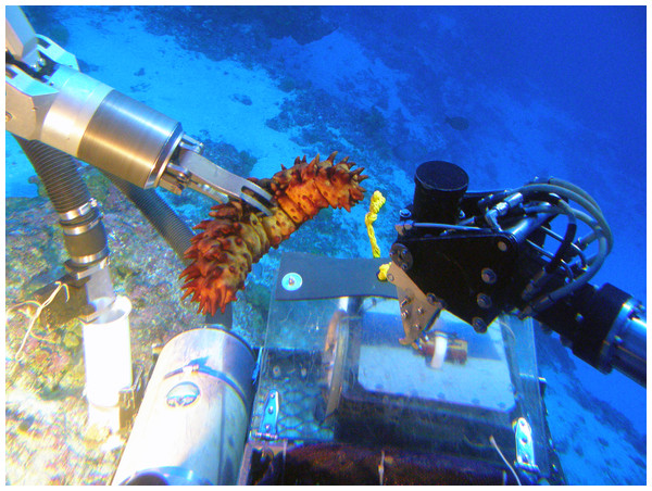 Collecting samples using the Pisces submersible manipulator arm.
