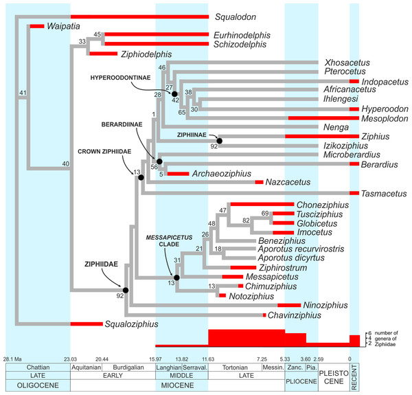 Stratigraphically calibrated phylogenetic tree of Ziphiidae.