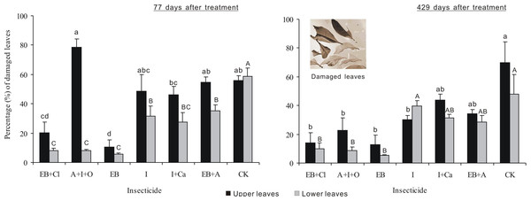 Percentage of damaged leaves.