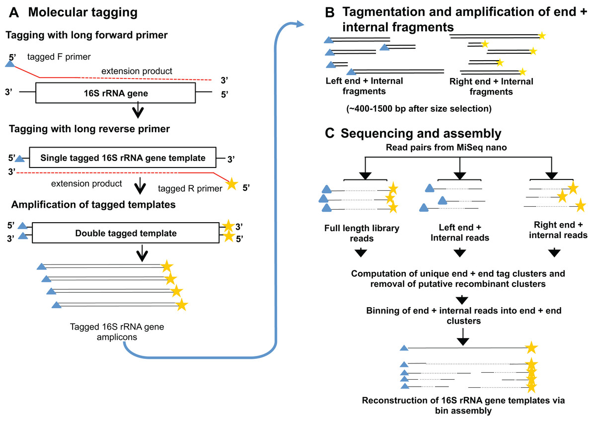 fig 1 2x a method for high precision sequencing of near full length 16s rrna