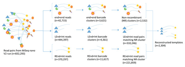 Schematic demonstrating the processing of read pairs from the MiSeq to reconstruct near full-length 16S rRNA gene sequences.