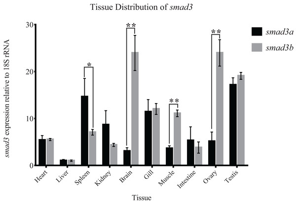 Expression patterns of smad3a and smad3b in Japanese flounder relative to 18S rRNA.