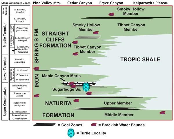 Late Cretaceous stratigraphy of southwestern Utah.