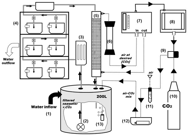 General scheme of the experimental system.