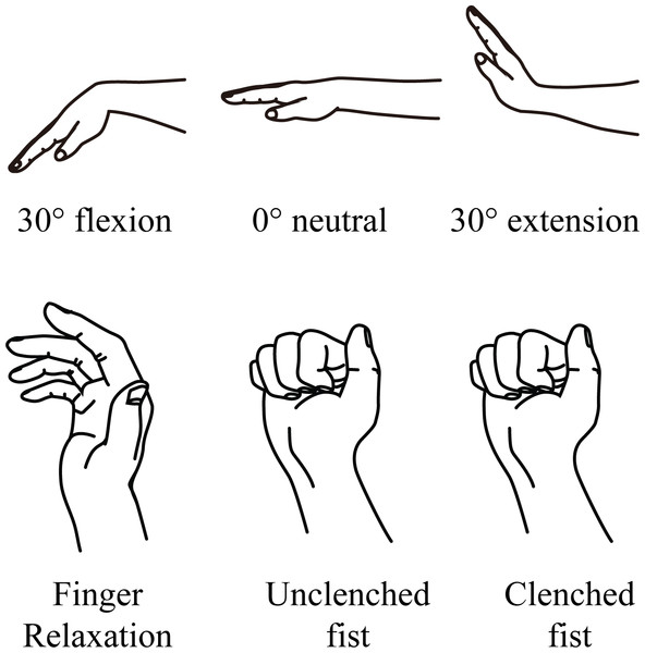 Grip conditions and wrist angles for ultrasound examination.