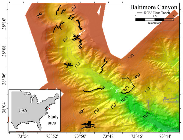 Multibeam sonar map of Baltimore Canyon showing P. placomus sample collection location (white arrow).