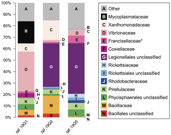 Relative abundance of common taxonomic groups in P. placomus samples.
