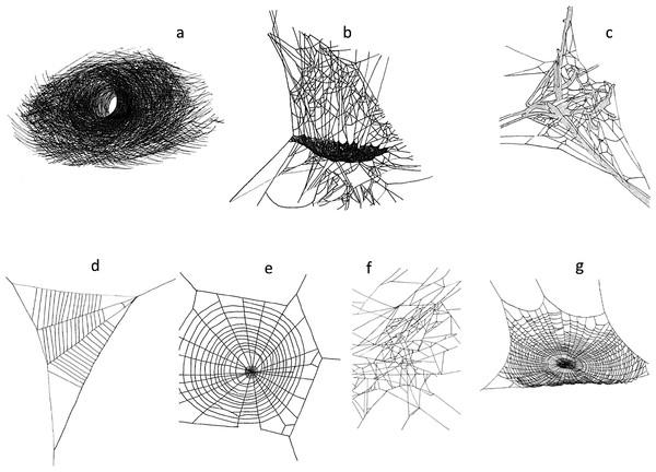 Web structures (A) funnel web (Agelenidae), (B) sheet web (Linyphiidae), (C) mesh web (Dictynidae), (D) reduced orb web (Uloboridae) (E) vertical orb web (Aranaeidae), (F) tangle web (Theridiidae), (G) horizontal orb web (Tetragnathidae).