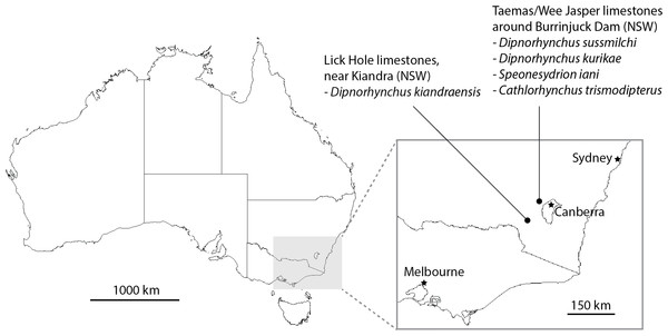 Map showing localities yielding Early Devonian dipnorhynchid taxa in south-eastern Australia.