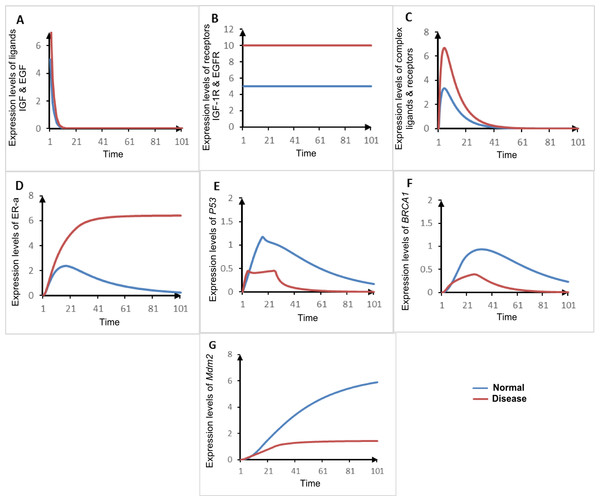 Comparison of simulated graphs of both homeostasis and disease ER-α associated HPN models.