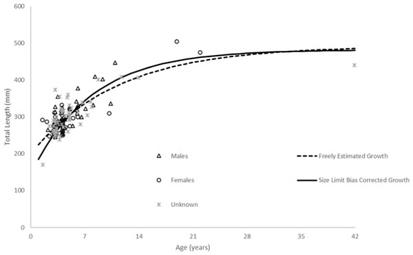 Comparison of SEUS schoolmaster observed size at age to von Bertalanffy growth curves for freely estimated (unweighted) and size limit bias-corrected model runs (McGarvey & Fowler, 2002).