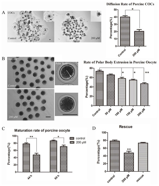 LIMKi 3 treatment suppresses porcine oocyte maturation in vitro (A) LIMKi 3 treatment efficiently restrained the diffusion of COCs.