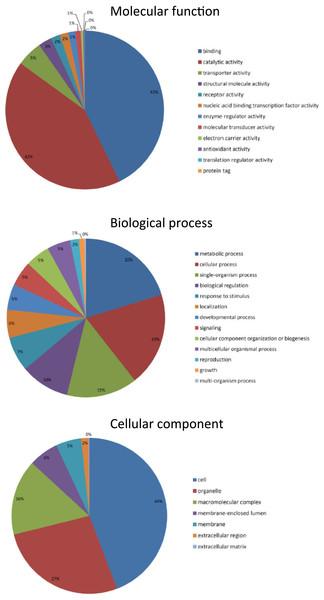 Talitrus saltator brain tissue transcriptome BLAST2GO analysis.