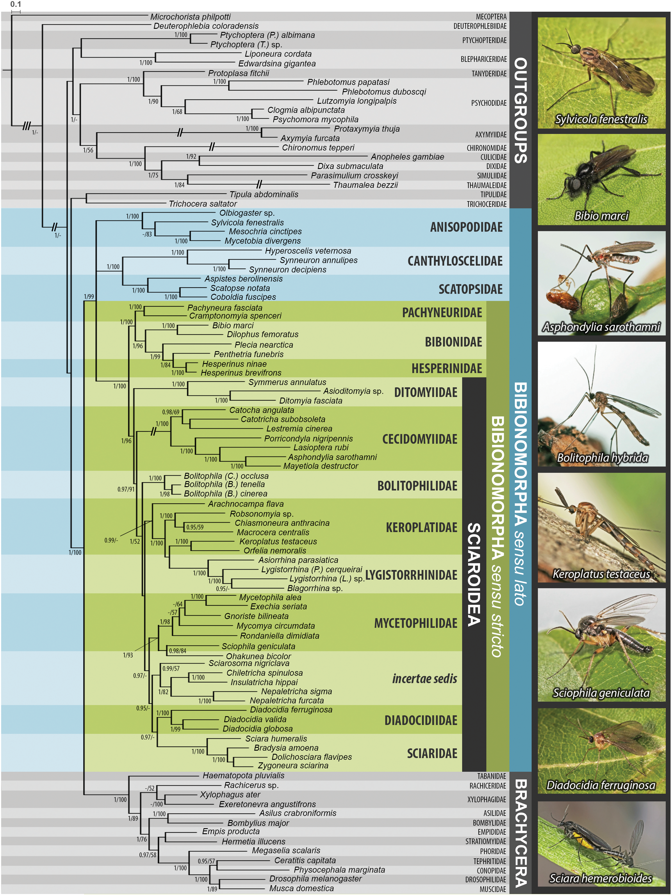 Molecular phylogeny of the megadiverse insect infraorder download full size image fandeluxe Choice Image