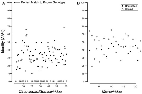 Percent identity between the capsid and replication genes for the discovered genotypes and their closest match from GenBank, which shows that all of the found genes are extremely dissimilar from their closest known relative.