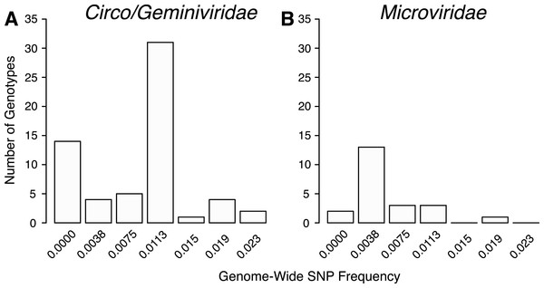 Distribution of SNP frequencies within identified genotypes.
