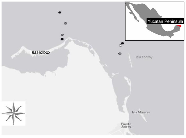 Location of sampling sites located at the northernmost tip of the Yucatán peninsula (21°31′18″N and 87°22′36″W) including the locations of manta rays surveyed via boat in 2010 (black dots), aerial surveys 2010 (white dots), and boat in 2011(grey dots).