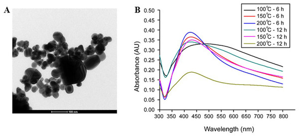 TEM image and UV-vis absorption spectra of AgNPs synthesized using an aloe vera plant-extract solution.