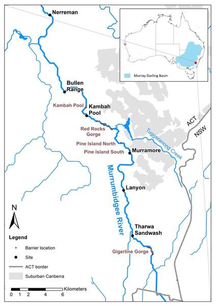 Upper Murrumbidgee River Maccullochella hybridisation study area.