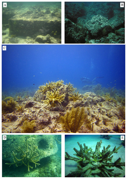 Reef restoration structures.