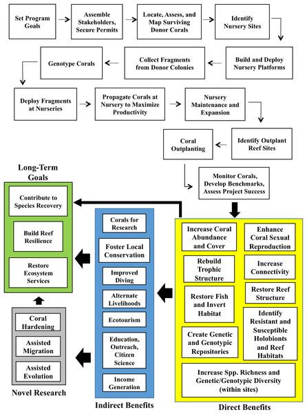 Coral gardening conceptual framework.