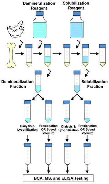 Flow chart depicting a generalized extraction method.