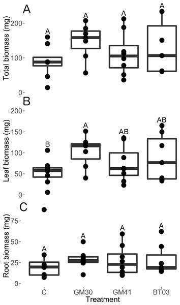 Biomass allocation of Populus trichocarpa that were not inoculated with bacteria (no microbe control) (n = 8), were inoculated with Pseudomonas GM30 (n = 7), Pseudomonas GM41 (n = 8), or Burkholderia BT03 (n = 7).