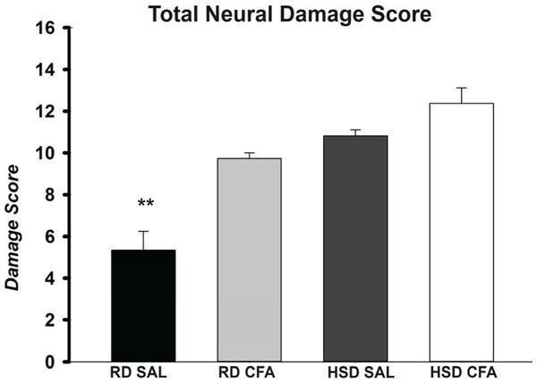 Total neuronal damage score.