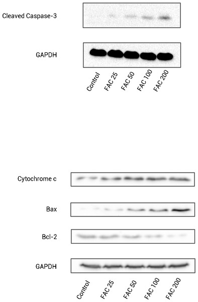 The expression of apoptosis-related proteins in osteoblasts.