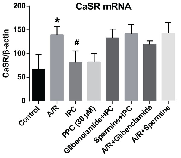 CaSR mRNA expression.