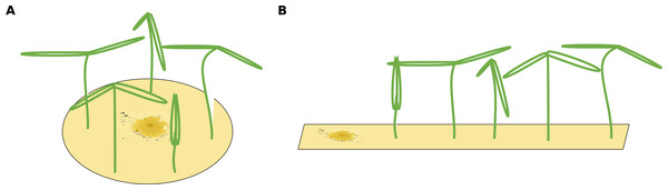 Two different possible setups for infection treatments.