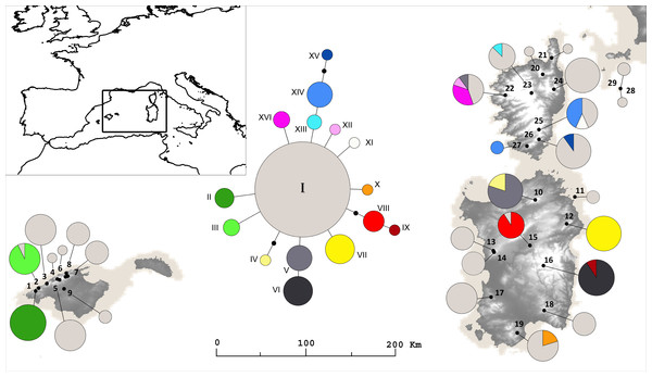 Sampling localities and Haplotypes.