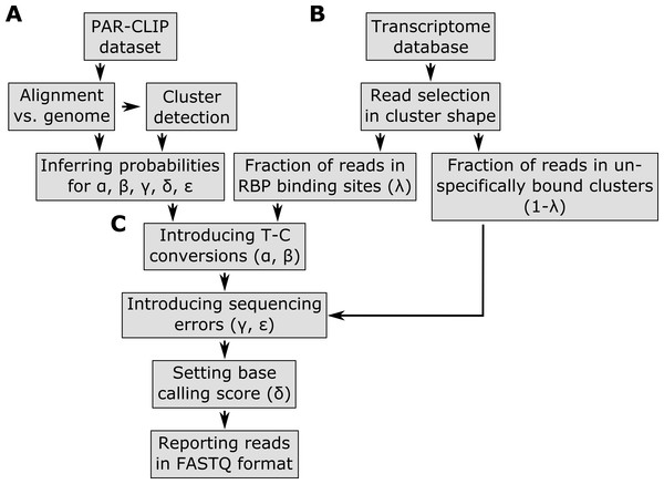 Pipeline of the PAR-CLIP read simulator implemented in the PARA-suite.