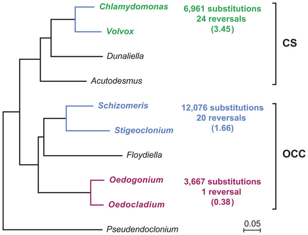 Compared evolutionary distances and chloroplast genome rearrangements in pairs of closely related green algae from the Oedogoniales, Chaetophorales, and Chlamydomonadales.