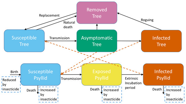 A schematic of the model system showing transitions to different categories for trees and adult psyllids.