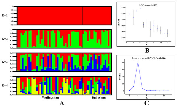 Bayesian cluster analysis of the microsatellite variation among two Elaphodus cephalophus populations.