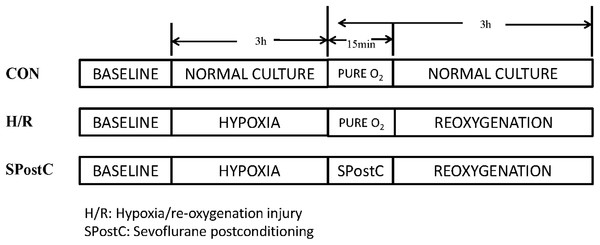 Experimental groups with respective protocols.