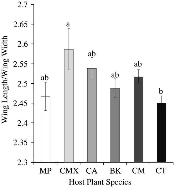 Wing aspect ratios (wing length/wing length) (mean ± SE) for ACP reared on different host plant species (BK, Bergera koenigii; CA, Citrus aurantifolia; CM, Citrus macrophylla; CMX, Citrus maxima; CT, Citrus taiwanica; MP, Murraya paniculata).