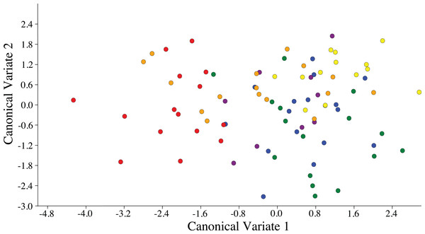 Scatterplot depicting the first two canonical variates of a canonical variate analysis of distance variables of female ACP reared on different host plant species (Bergera koenigii = orange dot, Citrus aurantifolia = blue dot, Citrus macrophylla = green dot, Citrus maxima = purple dot, Citrus taiwanica = red dot, Murraya paniculata = yellow dot).