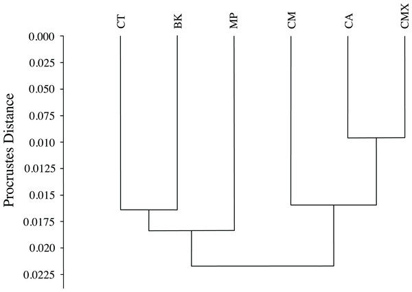 Dendrogram formed by means of the UPGMA method using Procrustes distances of female ACP reared on different host plant species.