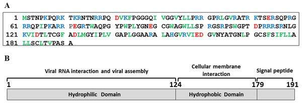 HCV core protein.