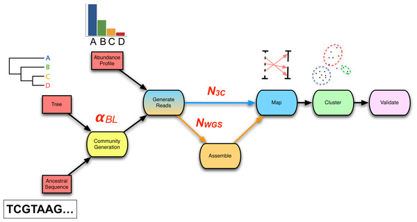 The 3C sequencing simulation pipeline used within the parameter sweep.